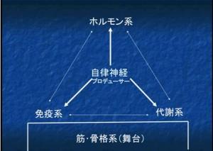 筋・骨格系統図
